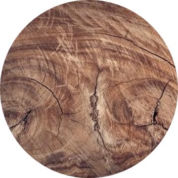 Drevo a parožie, Holz und Geweih, Wood and Antlers