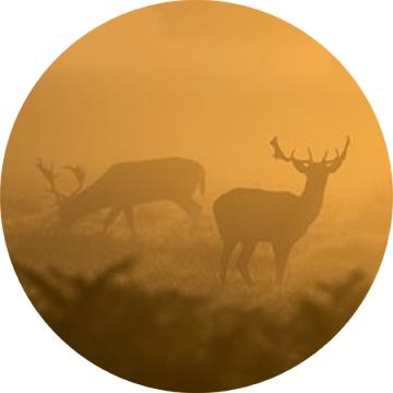 Poľovníctvo - jeleň, srnec, medveď, kamzík, muflón, vlk, Hunting - deer, bear, chamois, mouflon, wolf, Jagd - Hirsch, Bär, Gämse, Mufflon, Wolf